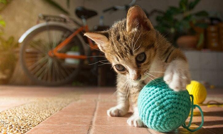 jouet pour chat à distance