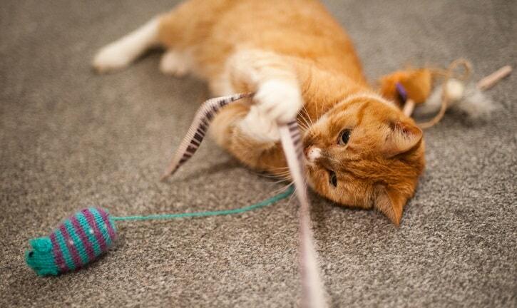 meilleur jouet interactif pour chat