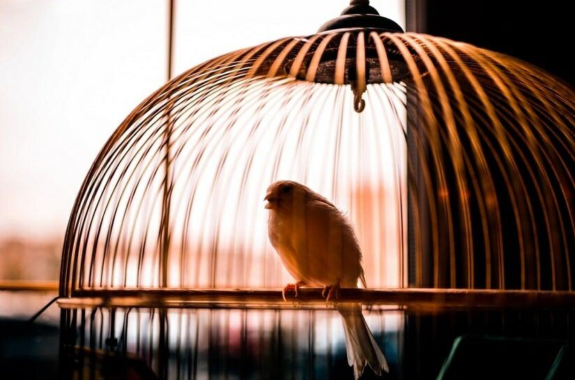 meilleure cage canari